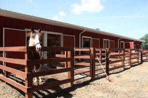 oct16-horse