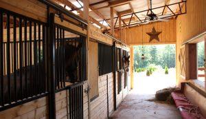 nov16-horses